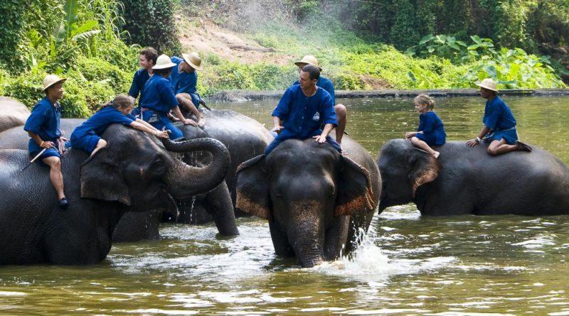 ศูนย์อนุรักษ์ช้างไทย ลำปาง